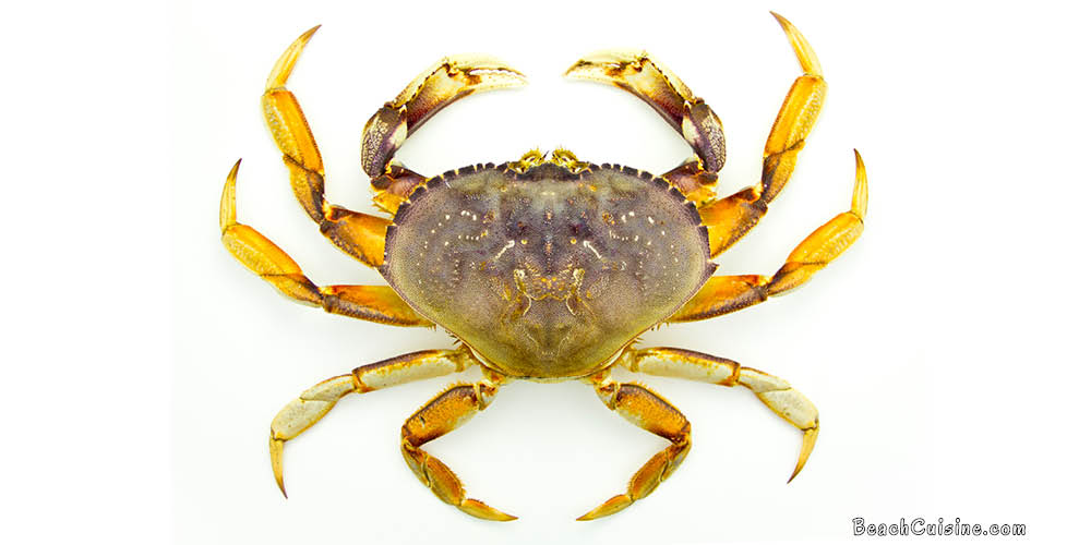 Video Production: Dungeness Crab